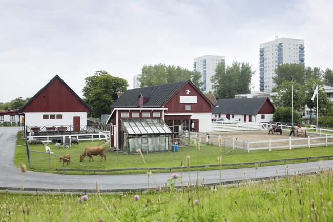 Azienda agricola con mucche e cavalli — Foto stock