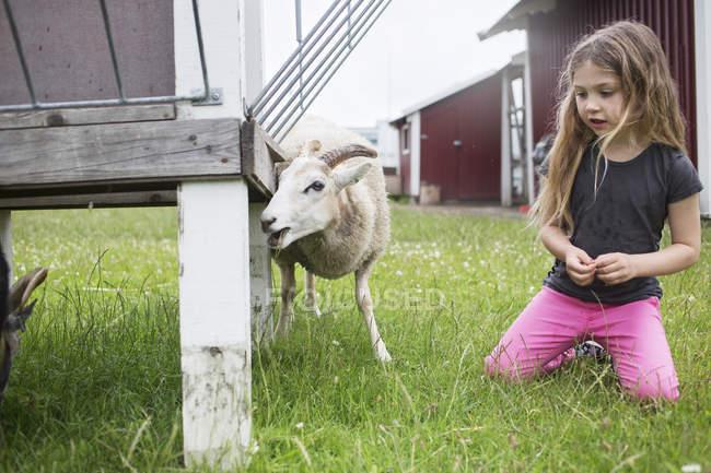 Mädchen (4-5) kniend neben Ziege — Stockfoto