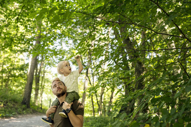 Pai, filho (2-3) no ombros sob árvores — Fotografia de Stock