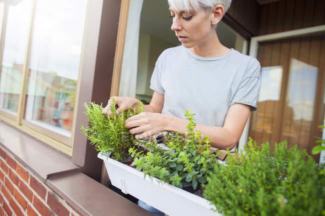 Woman checking herbs on balcony — Stock Photo