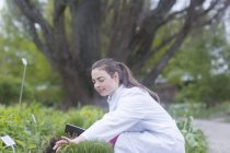 Scientist inspecting plants in greenhouse — Stock Photo