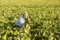 Woman farmer on beetroot field — Stock Photo