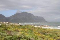 Linea costiera con campo verde — Foto stock