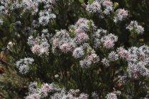 Blumen im Botanischen Garten — Stockfoto