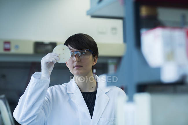 Scientist examining sample of test in laboratory — Stock Photo