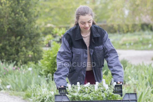 Female gardener transporting flowers in wheelbarrow — Stock Photo
