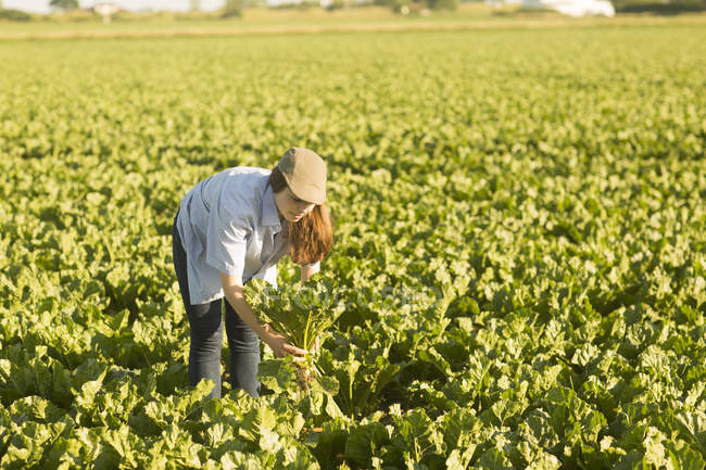 Coltivatore della donna sul campo di barbabietole — Foto stock