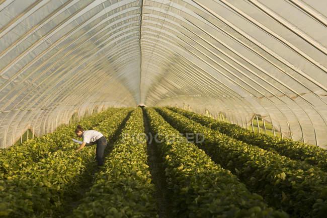 Farmer woman at greenhouse — Stock Photo