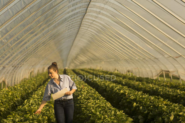 Farmer woman at greenhouse — Stock Photo