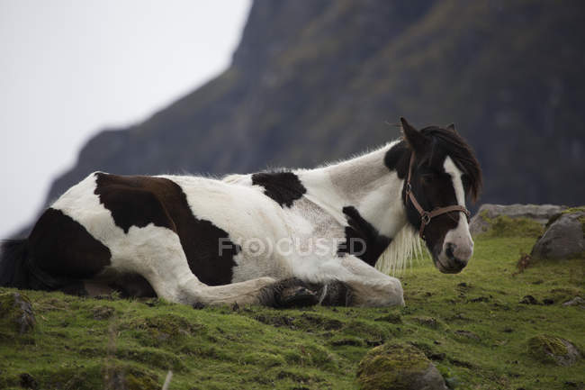 Spotted horse lying on mountain pasture — Stock Photo