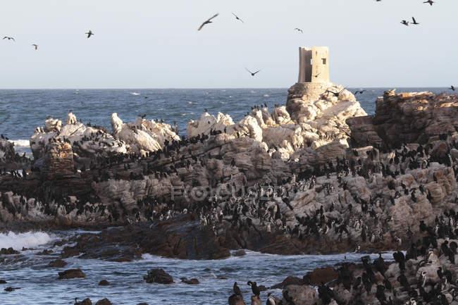 Colony of water birds — Stock Photo