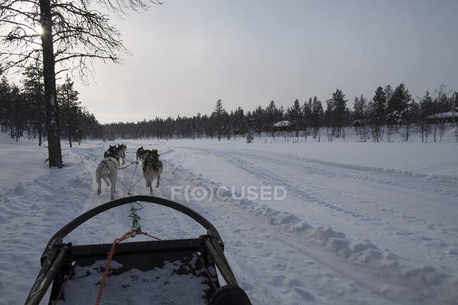 sledding dogs pulling sleigh in countryside in wintertime copy