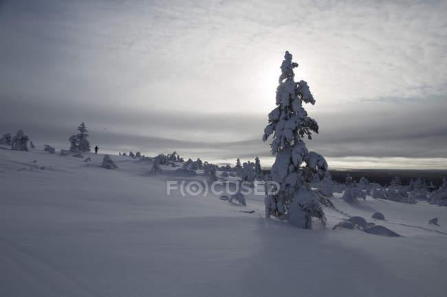 Deserto de montanhas cobertas de neve de floresta de coníferas — Fotografia de Stock