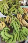 Fresh bananas on market — Stock Photo