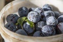 Prugne fresche raccolte in secchio — Foto stock