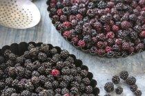 Fresh picked blackberries — Stock Photo