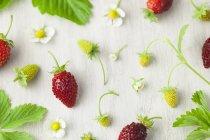 Homegrown alpine strawberries — Stock Photo