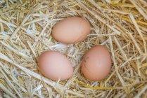 Fresche uova crude — Foto stock