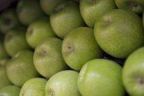 Green Fresh Apples — Stock Photo