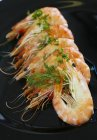 Cooked king prawns — Stock Photo