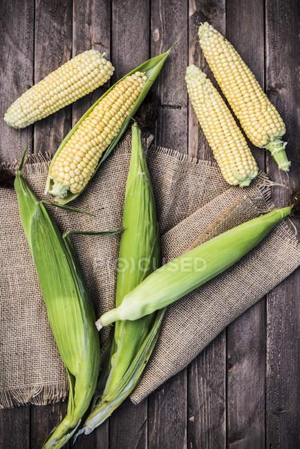 Frisch gepflückte Mais — Stockfoto