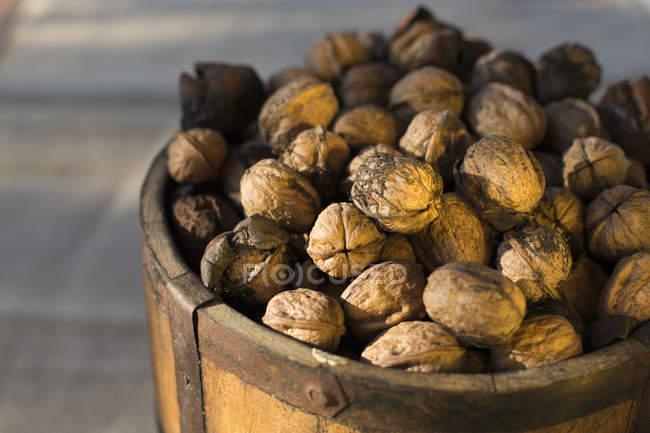 Freshly harvested Spanish walnuts — Stock Photo