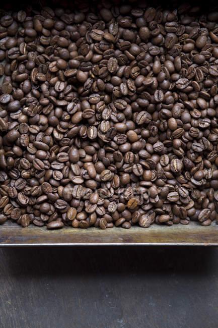 Кофейные зерна в металлическом контейнере — стоковое фото