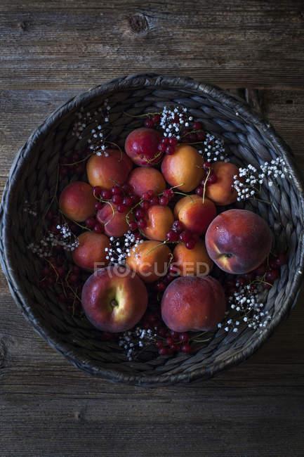 Абрикосы, нектарины и красной смородиной — стоковое фото