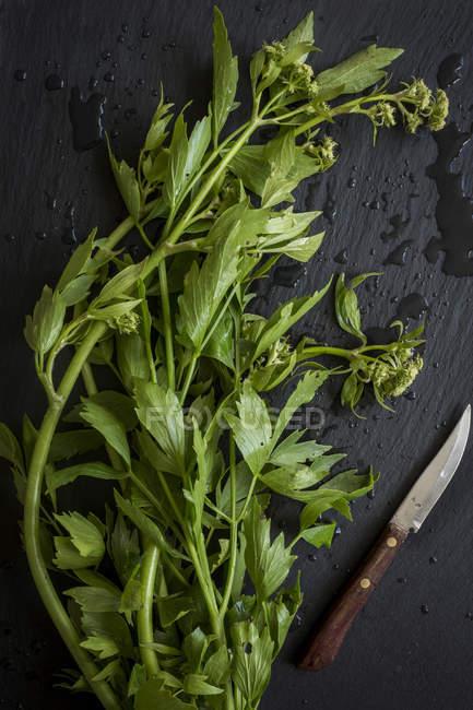 Hierbas verdes frescas - foto de stock