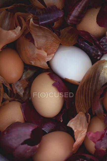 Easter eggs in onion skins — Fotografia de Stock