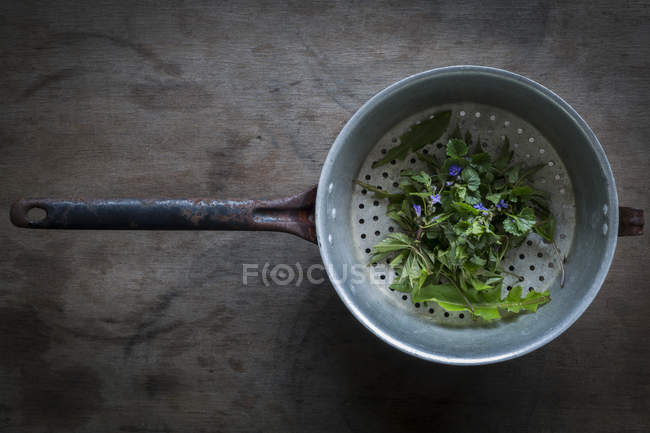 Wild herbs in vintage colander — Stock Photo