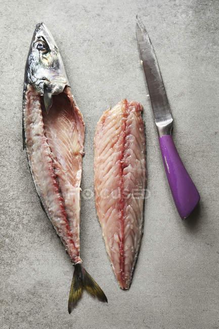 Filet de poisson maquereau — Photo de stock