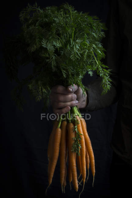 Bundle of carrots in hand — Stock Photo