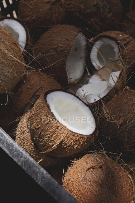 Fresh coconuts in cut - foto de stock