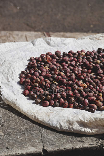 Nutmeg seeds drying on cloth - foto de stock