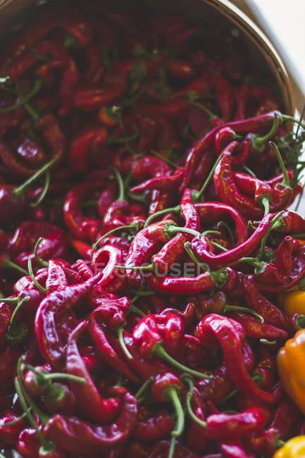 Fraîchement cueillies piment poivrons — Photo de stock
