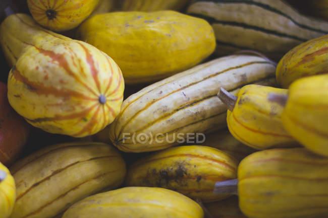 Fresh delicata squash — Stock Photo