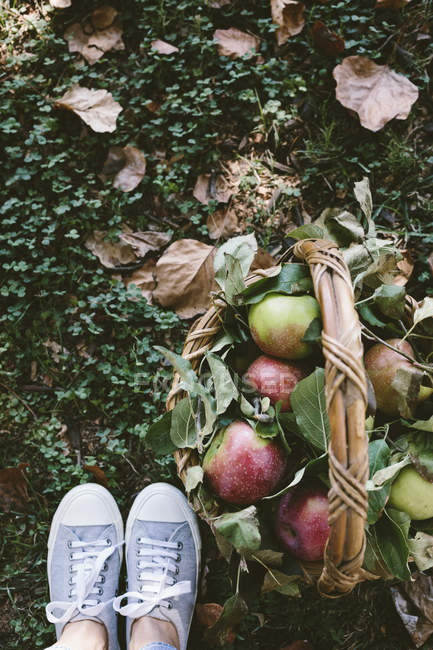 Basket with apples near female feet — Stock Photo