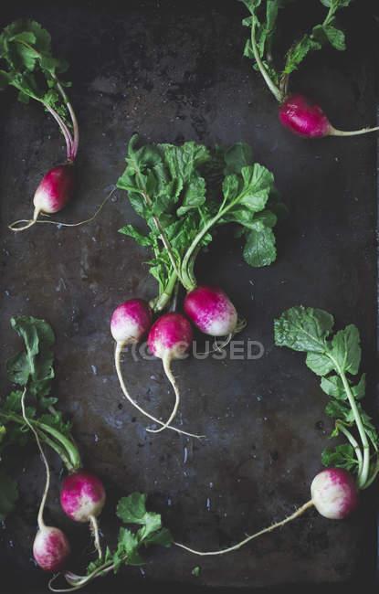 Розовый и белый редис — стоковое фото