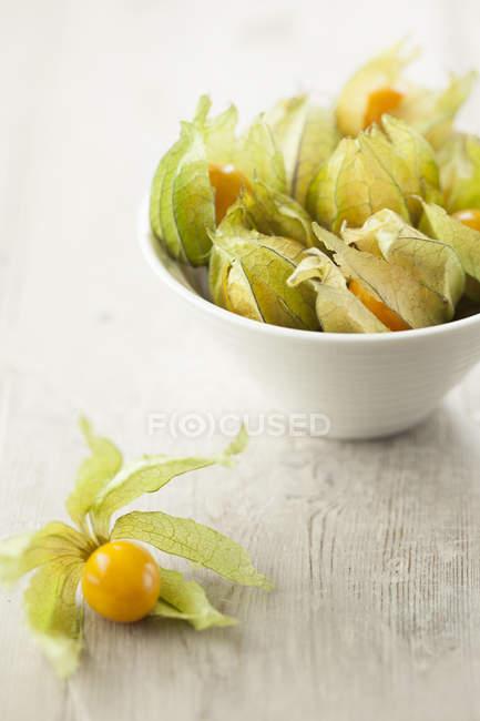 Fresh picked physalis berries — Stock Photo