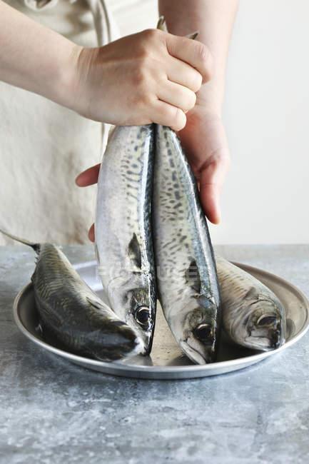 Femelle mains tenue poissons — Photo de stock