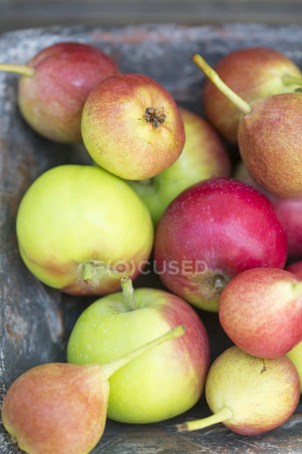 Red apples and pears — Stock Photo