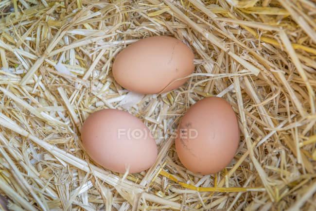 Fresh raw eggs — Stock Photo