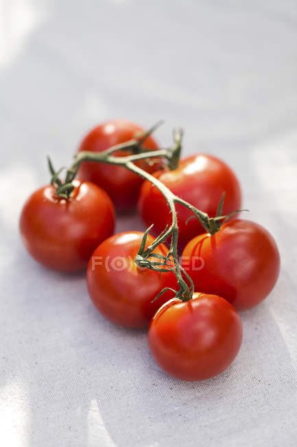Vine Riped Tomatoes — Stock Photo