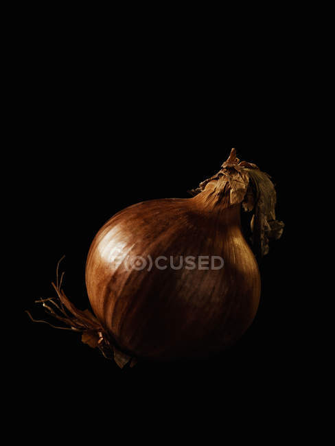 Cebola fresca madura — Fotografia de Stock