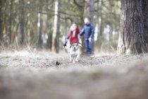 Пара выгуливает двух собак в лесу — стоковое фото