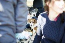 Две собаки предвидеть Прогулка в лесу — стоковое фото
