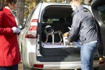 Couple prepare two dogs for walk — Stock Photo