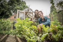 Gardeners work in vegetables garden — Stock Photo