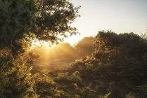 Sunrise landscape in misty New Forest — Stock Photo